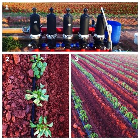 Montagem irrigação 2