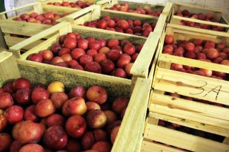 Caixas de madeira não são as ideais para todos os alimentos e podem contribuir para perdas. (Foto: Paulo Palma Beraldo)