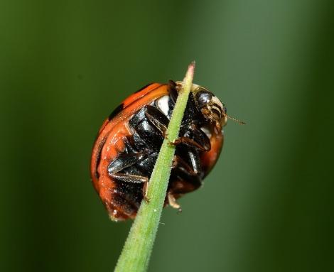 Um pequeno inseto pode vir a ser um grande transtorno para quem sofre com a entomofobia. (Imagem: pixabay)