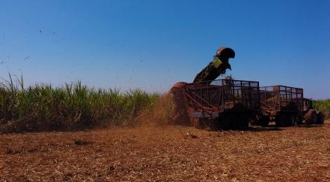 Colhedora mecanizada em uma plantação de cana de açúcar. Foto por: Mariana Mesquita.