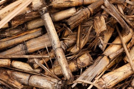 No Brasil, produção de etanol 2G utiliza principalmente a biomassa de cana-de- açúcar. (Créditos: Pixabay)