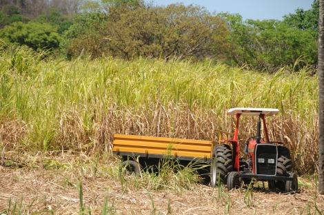Produção em larga escala do etanol 2G ainda não economicamente viável. (Créditos: Pixabay)